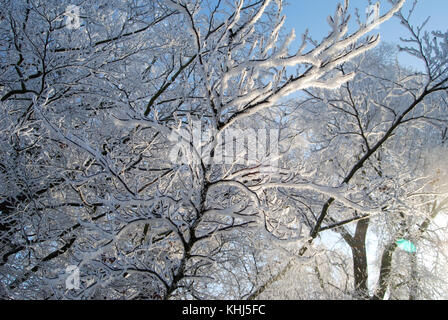 Totally white tree covered with new snow on a sunny winter day - texture background - Stock Photo