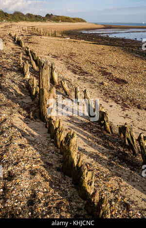 Wooden groynes helping to prevent coastal erosion at Lepe Country Park, foreshore and beach, New Forest, Hampshire, - Stock Photo