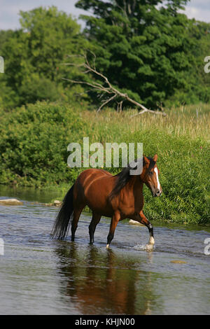 Arab Walking In A River - Stock Photo