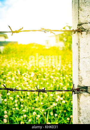 Rusty old fence barbed wire with concrete pole on blurred flower field as the background with flare light - Stock Photo