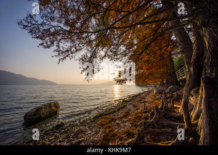 Coastline with unusual roots and trees on Iseo Lake near Riva di Solto, Italy - Stock Photo