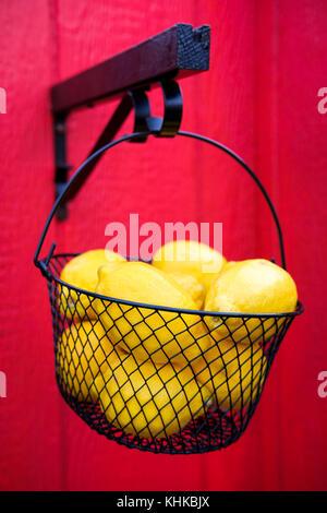 Black wire basket full of yellow Eureka lemons (Citrus limon) against bright red background - Stock Photo