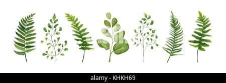 Vector designer elements set collection of green forest fern frond maidenhair greenery art foliage natural leaves - Stock Photo
