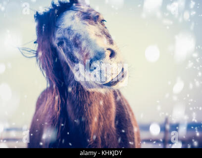 Funny Horse enjoys winter and snow, close up, focus on the nose - Stock Photo