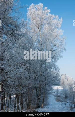 Natura 2000, Polanka Wielka, Poland, Europe. Trees covered in frost. - Stock Photo