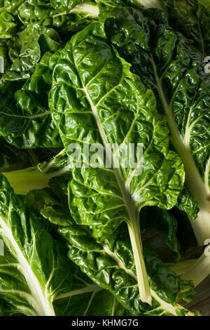 Raw Organic Green Swiss Chard Ready to Cook - Stock Photo