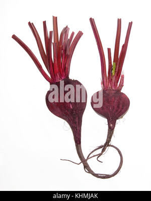 Beetroot on White Background - Stock Photo