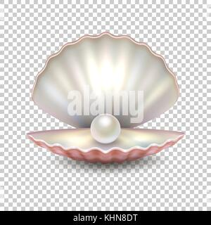 Realistic vector beautiful natural open sea pearl shell closeup isolated on transparent background. Design template, - Stock Photo