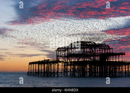 Brighton, UK. Starling murmurations at sunset over Brighton's derelict West Pier. - Stock Photo