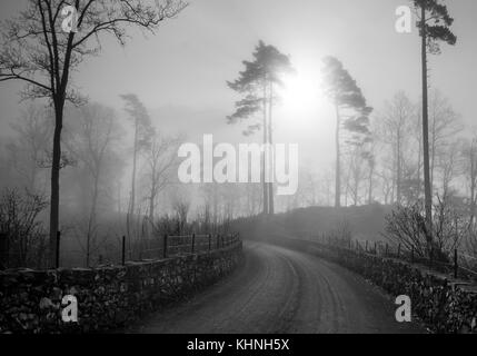 A black&white scene of a road leading to the sun rising in the mist between two pine trees with a stone fences on - Stock Photo