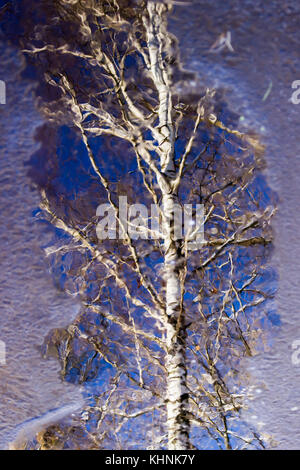 Upside down birch trees in winter river - Stock Photo