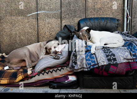 Two street dogs sleep comfortably on dismissed blankets in the street of Buenos Aires - Stock Photo