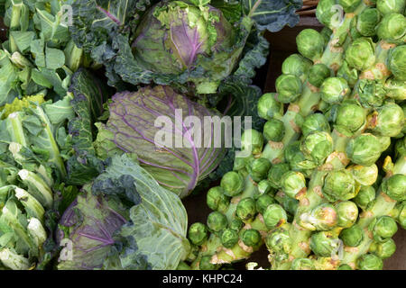 Brussels sprouts, cabbages and cauliflowers for sale at a farmers market selling fresh vegetables and produce as - Stock Photo
