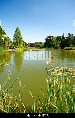 Scenic view of water lillies on garden lake at Burnby Hall Gardens, East Riding of Yorkshire, UK - Stock Photo