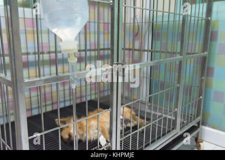Dog sleeping for recovery in the cage after the surgery. - Stock Photo