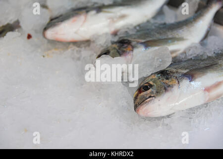 Close-Up Of Freshly Caught Gilt-Head Sea Bream Or Sparus Aurata On Ice Lined Up For Sale In The Greek Fish Market - Stock Photo
