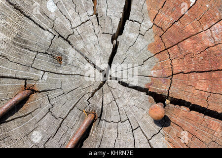Extreme Close-Up Of Growth Rings And Radial Splits On The End Of A Log With Rusty Nails - Stock Photo