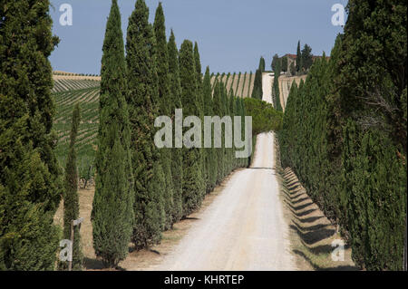 Wineyard near to Castellina in Chianti, Tuscany, Italy. 28 August 2017 © Wojciech Strozyk / Alamy Stock Photo - Stock Photo