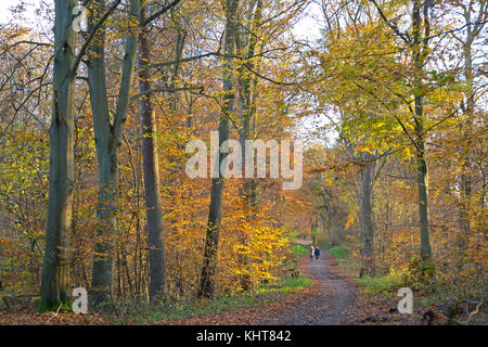 forest in autumn, Lueneburg, Lower Saxony, Germany - Stock Photo