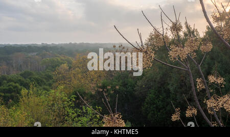 Fog over Forest with Tree Branch in the foreground - Stock Photo