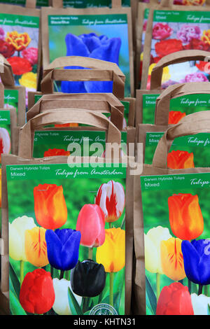 Tulip bulbs on sale at the world famous floating flower market on the Singel canal, in Amsterdam in the Netherlands - Stock Photo