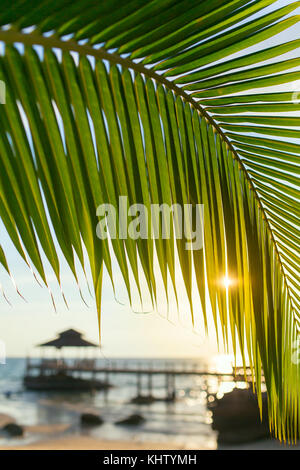 Palm tree leaf close-up during beautiful sunset on Koh Kood island, Thailand - Stock Photo