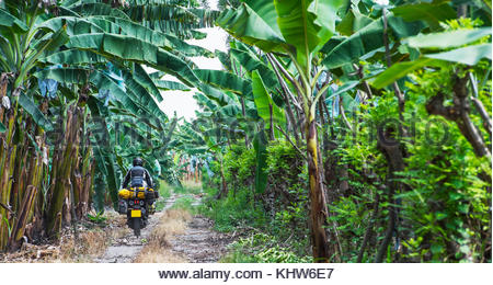 Man riding touring motorbike through banana plantation, Machala, El Oro, Ecuador, South America - Stock Photo