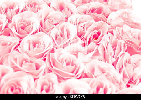 colorful pink rose flowers background for wedding concept. Abstract, idea for invitation card, greeting, congratulation, - Stock Photo