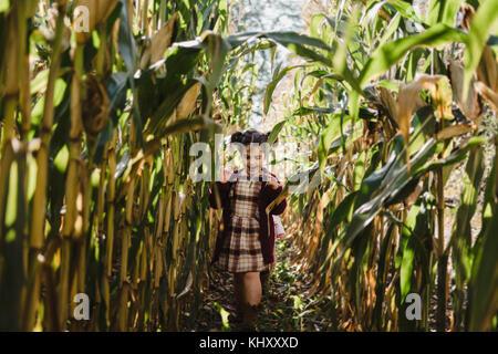 Girl in cornfield, Oshawa, Canada, North America - Stock Photo