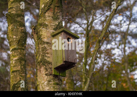 Old wooden, previously used Bird Nest Boxes in winter woodland, Southport, UK - Stock Photo