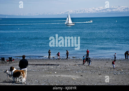 People playing on beach at low tide of Homer Spit with sailboat and motorboats in Kachemak Bay, Kenai Peninsula, - Stock Photo