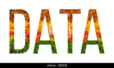 word data written with leaves white isolated background, banner for printing, creative illustration of colored leaves. - Stock Photo