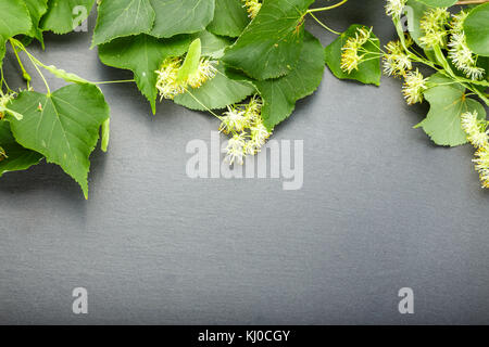 Inflorescences of lime lie on a black board. Top view, there is space for text - Stock Photo