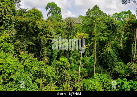 Tropical Forest of Kakum National Park. A 375 square km national park located in the Central Region of Ghana. - Stock Photo