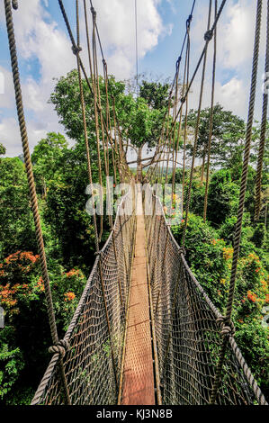 Canopy Walkway in Kakum National Park. A 375 square km national park located in the Central Region of Ghana. Kakum - Stock Photo