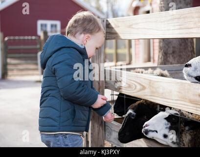 Toddler Boy Visiting a Local Urban Farm and Feeding the Goats - Stock Photo