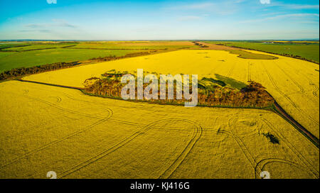 Aerial panorama of canola field at sunset in Australia - Stock Photo