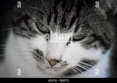 Close-up of a sleepy cat - Stock Photo