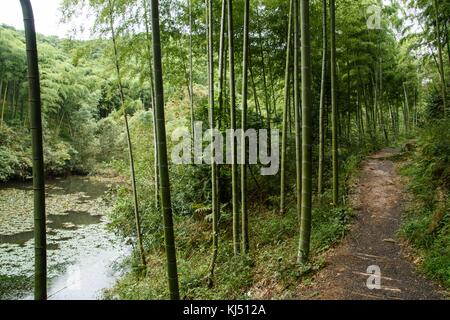 Path way leading pass dam in bamboo forest at Moganshan in China - Stock Photo