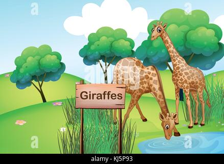 Illustration of the two giraffes at the forest with a wooden sign board - Stock Photo