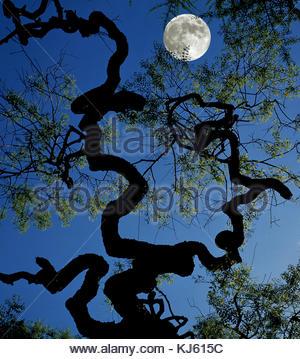 Full Moon, Impression, Tree - Stock Photo