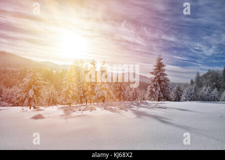 Majestic white spruces glowing by sunlight. Picturesque and gorgeous wintry scene. - Stock Photo