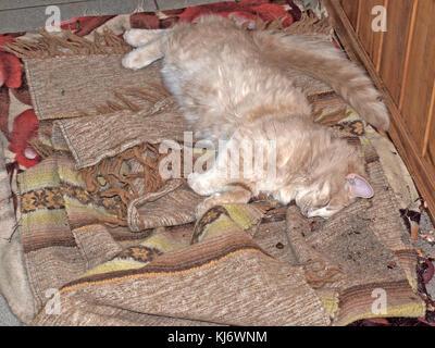 Cat is sleeping in deep sleep on clothes on floor focus on face. - Stock Photo