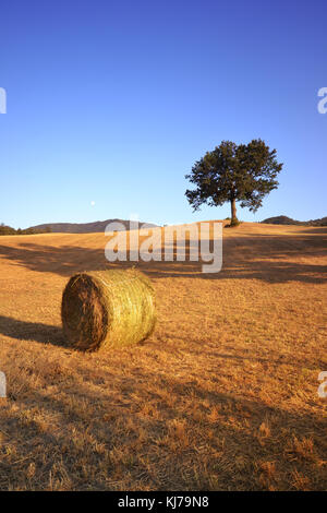 Oak tree and hay bale in a country fild in central Italy during a sunny summer afternoon. - Stock Photo
