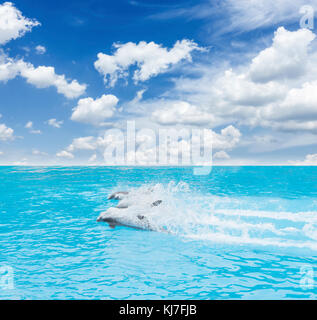 pack of swimming dolphins, beautiful seascape with deep ocean waters and cloudscape at bright day - Stock Photo