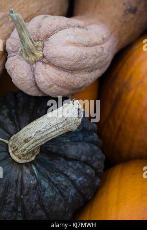 Close up. Pumpkins top view - Stock Photo