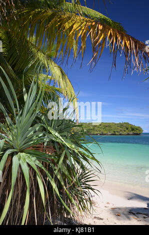 Palm tree on tropical island. Taken at Isle of Pines New Caledonia - Stock Photo