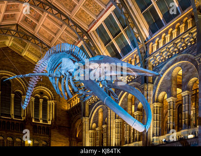 Blue whale skeleton named Hope, hanging in the Hintze Hall, Natural History Museum, London, UK. - Stock Photo