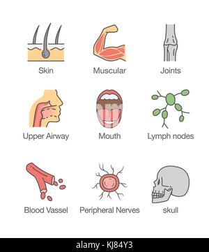 Human body part and internal icon. - Stock Photo