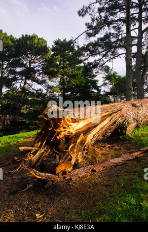 close-up of a broken tree - Stock Photo